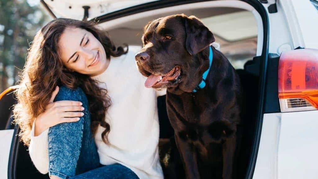 Hundebox XXL für große Hunde