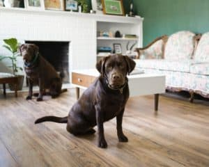 Hundebox für Labrador
