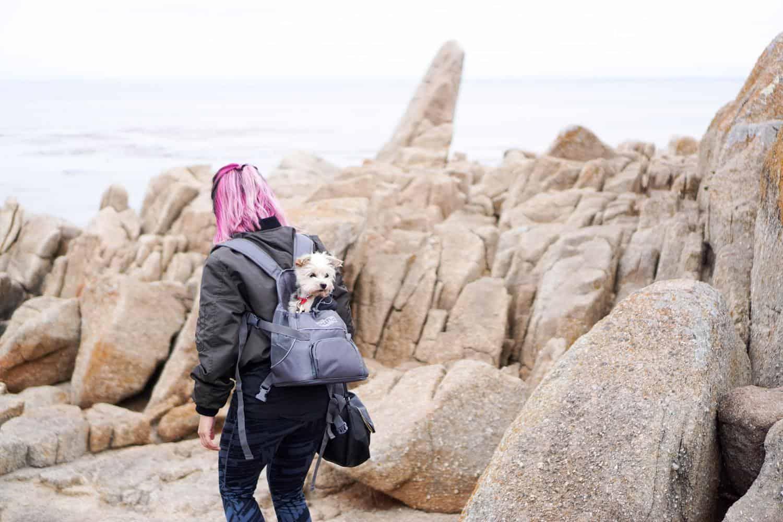 Hunderucksack bis 15kg