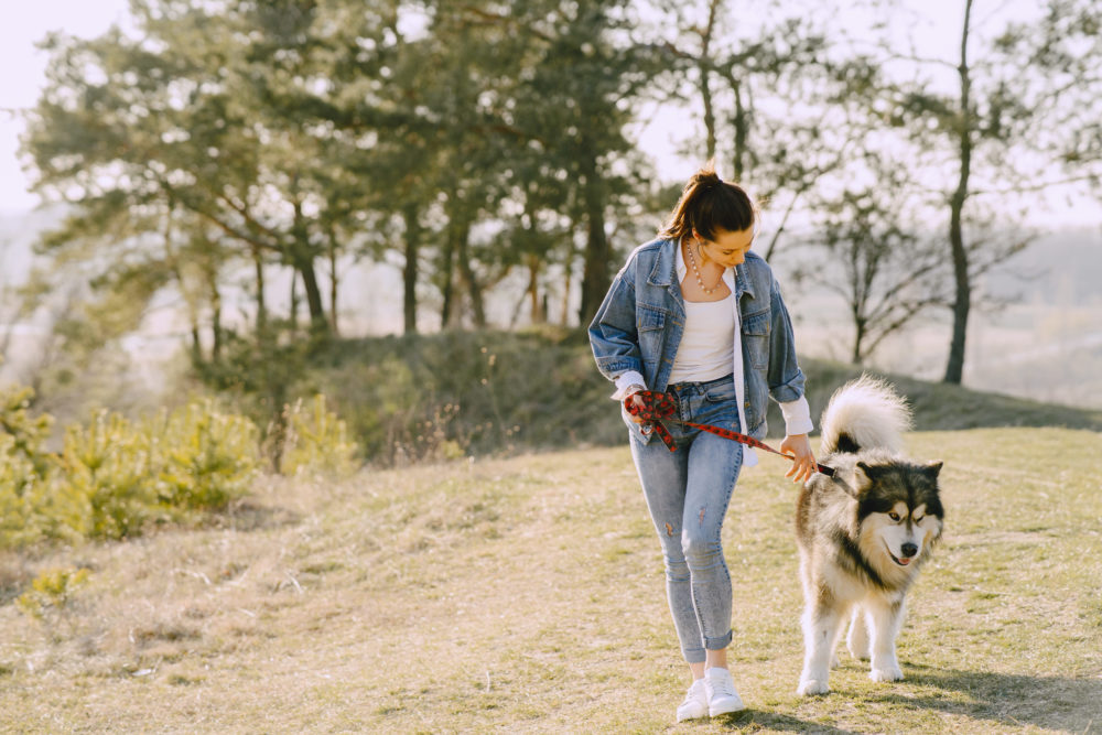 Dein Hund bellt andere Hunde an beim Gassi gehen