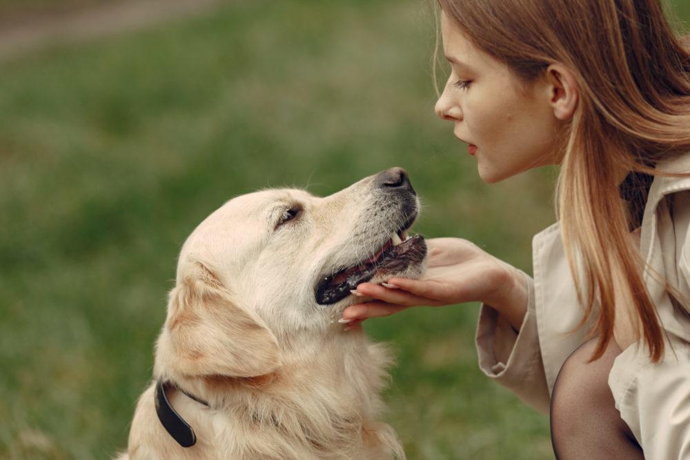 hund bellt andere hunde an