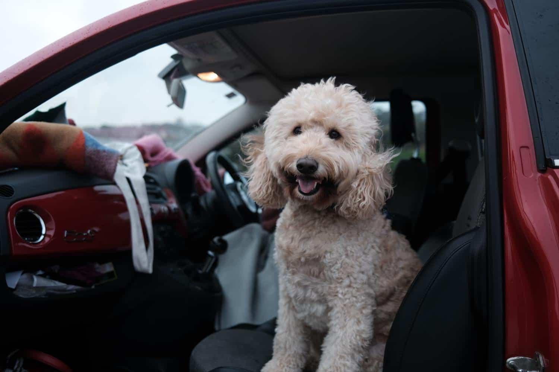 Hundegurt Auto