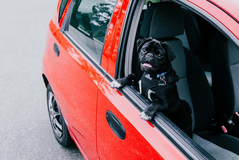 Autoschondecke Hund