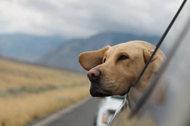 Hunde Sicherheitsgurt
