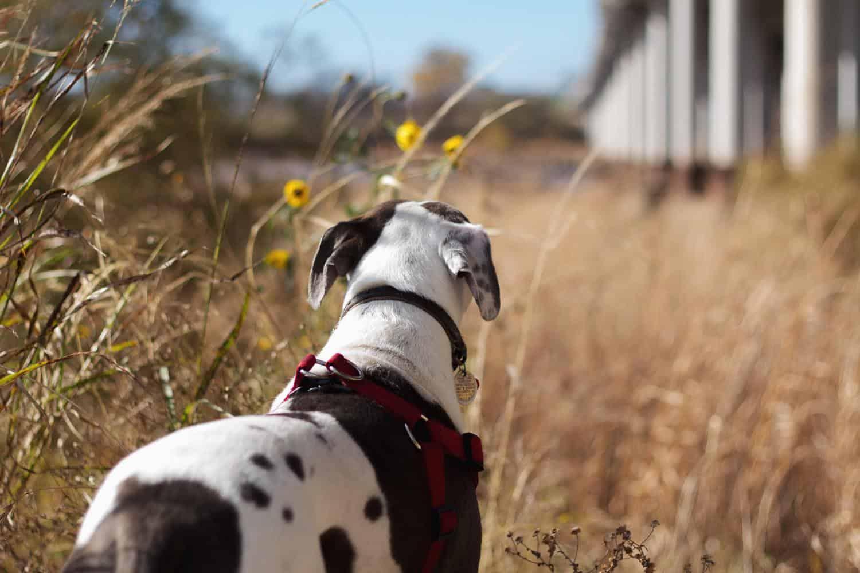 ausbruchsicheres Hundegeschirr