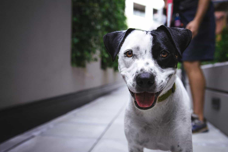 GPS Tracker Hund ohne Abo