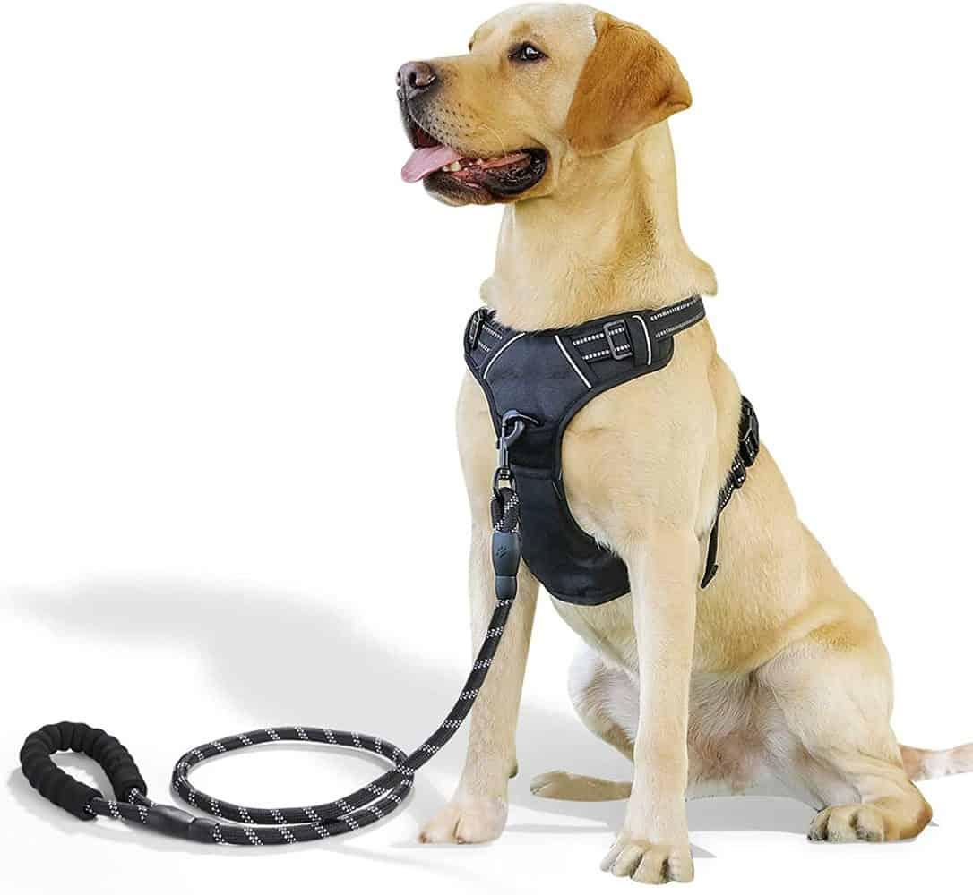 Raining Pet Hundegeschirr mit Brustring