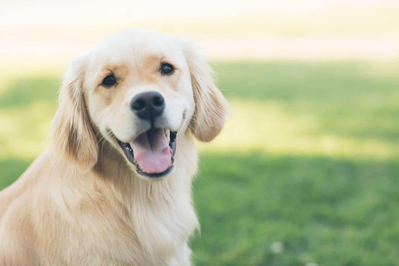 Gps Tracker für Hunde ohne Abo
