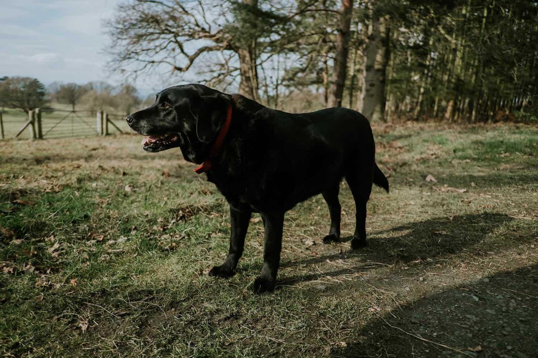 Tragehilfe für alte Hunde