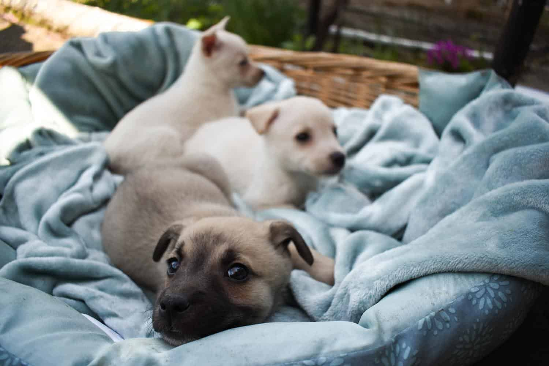 Hundebett mit hohem Rand