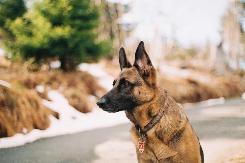 Transportbox Schäferhund