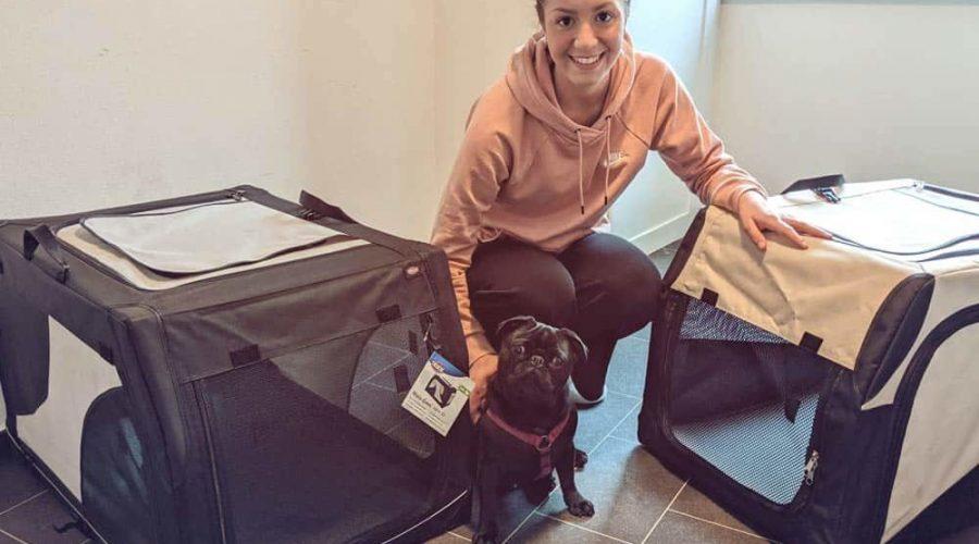 Faltbare Hundetransportbox Test
