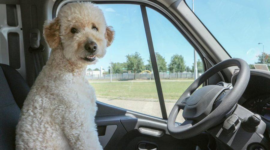 Hundebett fürs Auto
