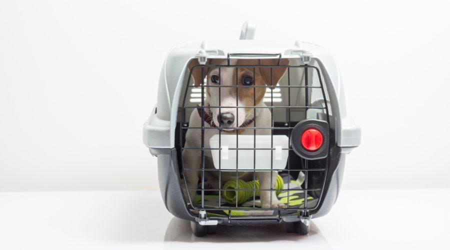 Hundetransportbox Kunststoff