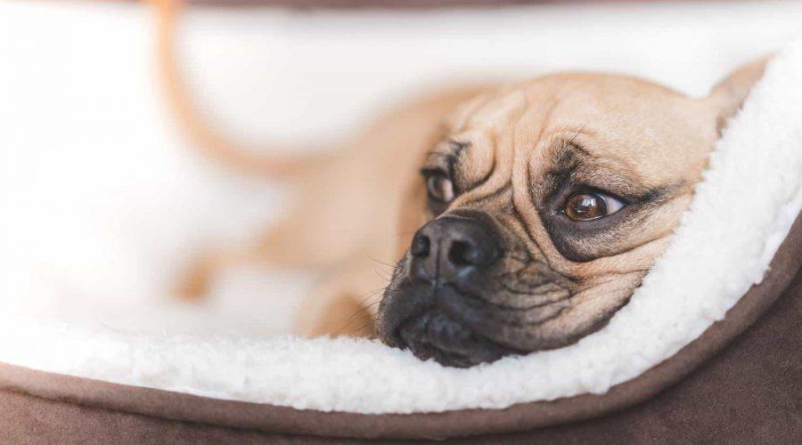 Orthopädisches Hundebett Test