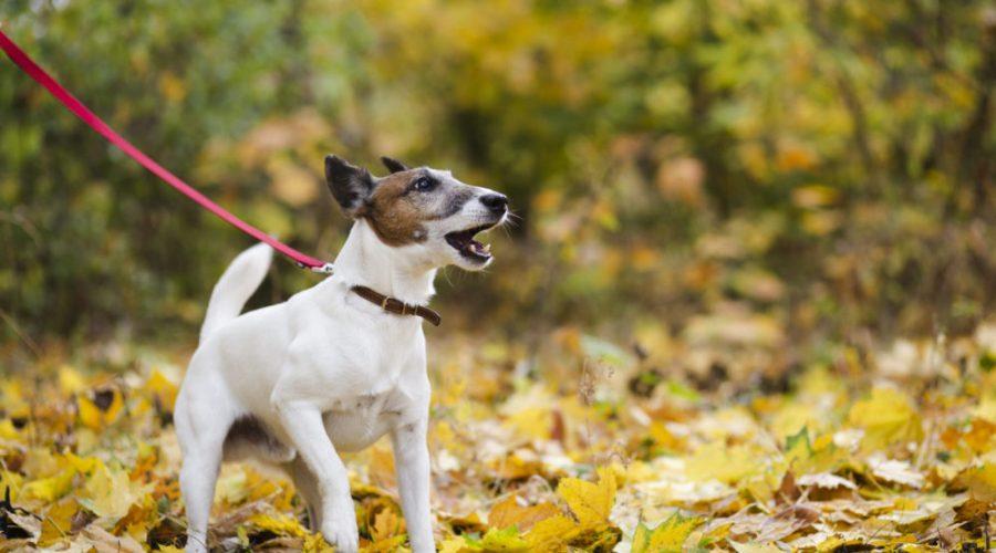 Hund bellt andere Hunde an beim Spielen